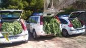 vista previa del artículo Se triplican las plantaciones clandestinas de Marihuana en Alicante