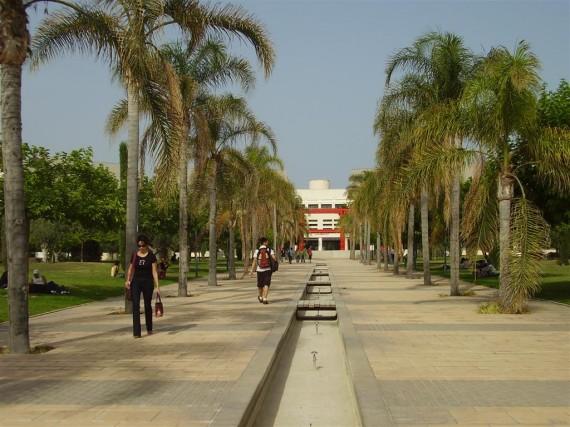 El Consejo de Gobierno aprueba la fijación de la UA a la Red de Universidades Saludables 1